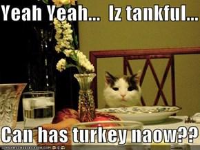 Yeah Yeah...  Iz tankful...  Can has turkey naow??