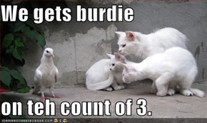 We gets burdie  on teh count of 3.