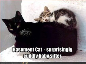 Basement Cat  - surprisingly 
