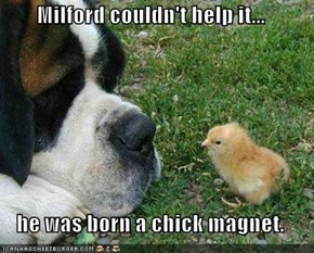 Milford couldn't help it...  he was born a chick magnet.