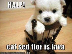 HALP!    cat sed flor is lava