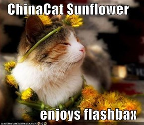 ChinaCat Sunflower  enjoys flashbax