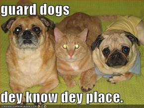 guard dogs  dey know dey place.