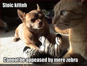 Stoic kitteh