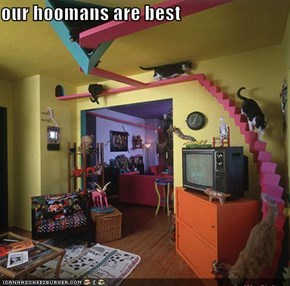 our hoomans are best
