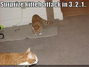 Surprize kitteh attack in 3..2..1..