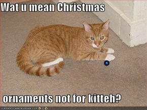 Wat u mean Christmas   ornaments not for kitteh?