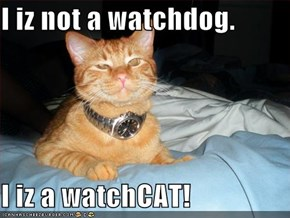I iz not a watchdog.  I iz a watchCAT!