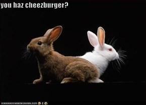 you haz cheezburger?