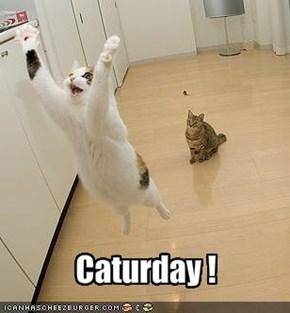 Caturday !