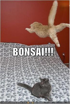 BONSAI!!!