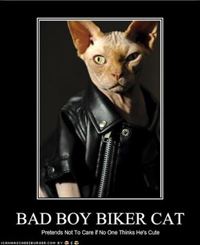 BAD BOY BIKER CAT