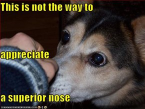 This is not the way to  appreciate a superior nose