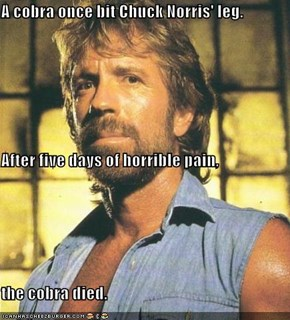 A cobra once bit Chuck Norris' leg. After five days of horrible pain, the cobra died.