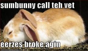 sumbunny call teh vet  eerzes broke agin