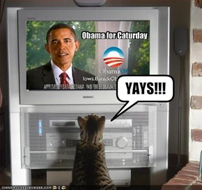 Obama for Caturday