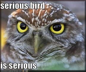 serious bird  is serious