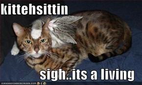 kittehsittin  sigh..its a living