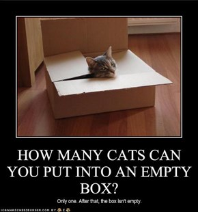HOW MANY CATS CAN YOU PUT INTO AN EMPTY BOX?