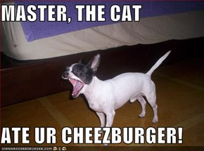 MASTER, THE CAT  ATE UR CHEEZBURGER!