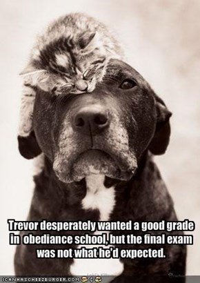 Trevor desperately wanted a good grade in  obediance school, but the final exam was not what he'd expected.