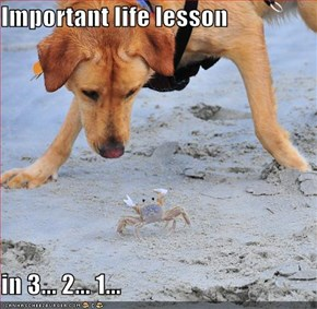 Important life lesson  in 3... 2... 1...