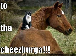 to tha cheezburga!!!