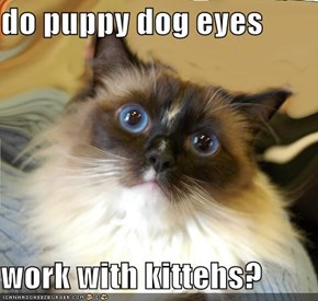 do puppy dog eyes  work with kittehs?