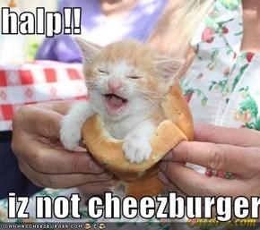 halp!!   iz not cheezburger!