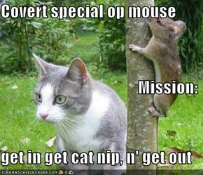 Covert special op mouse                                           Mission: get in get cat nip, n' get out