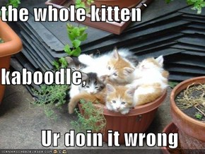 the whole kitten`  kaboodle,           Ur doin it wrong