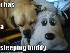 i has a sleeping buddy.