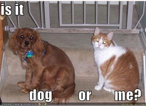 is it            dog         or        me?