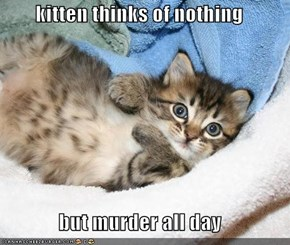 kitten thinks of nothing  but murder all day