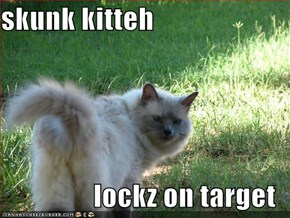 skunk kitteh  lockz on target