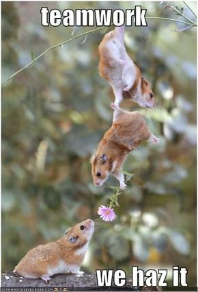 teamwork  we haz it