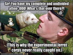 (This is why the experimental ferret corps never really caught on.)