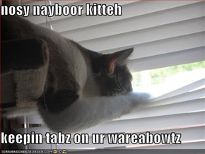 nosy nayboor kitteh  keepin tabz on ur wareabowtz