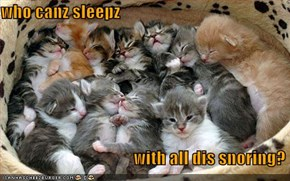 who canz sleepz                                         with all dis snoring?