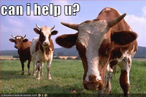 can i help u?