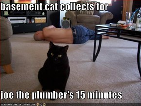 basement cat collects for   joe the plumber's 15 minutes