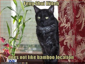 Feng Shui Kitteh  does not like bamboo location
