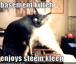basement kitteh  enjoys steem kleen