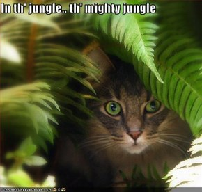 In th' jungle.. th' mighty jungle