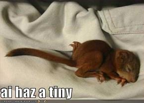 ai haz a tiny