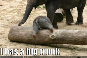 I has a big trunk