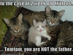 In the case of 2 week old Mittens....  ... Tomtom, you are NOT the father.