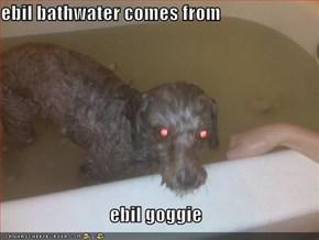 ebil bathwater comes from  ebil goggie