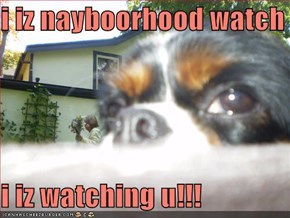 i iz nayboorhood watch  i iz watching u!!!