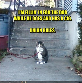 I'M FILLIN' IN FOR THE DOG 